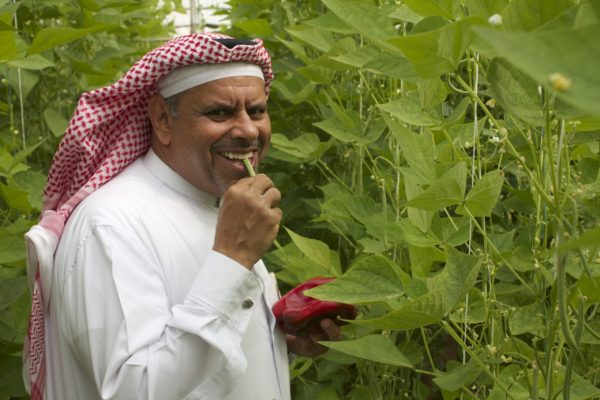 Desert Organics